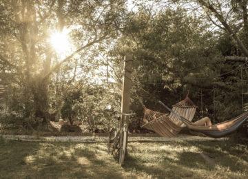 Garden with hammocks