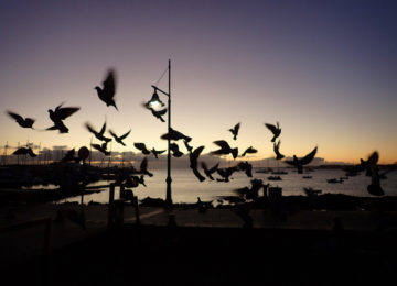 Birds fly by the sea at sunrise