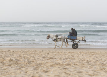 Carriage with horse rides along the beach