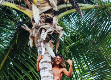A man climbs a palm tree