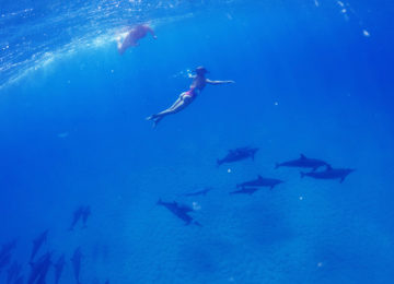 Guests dive with dolphins in Hawaii