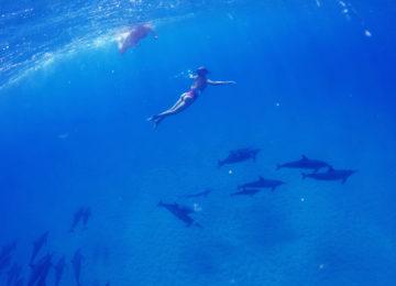 Gäste tauchen auf Hawaii mit Delfinen