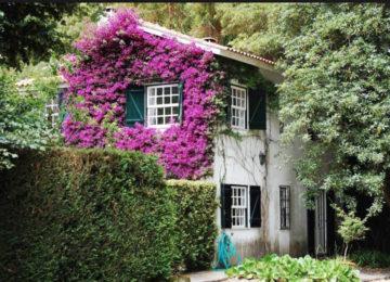 Mit Blumen bewachsene Hausmauern
