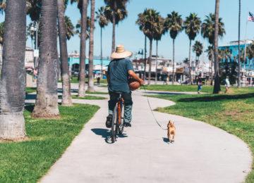 Velofahrer mit Hund in Venice