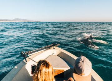 Delfine während Bootausflug