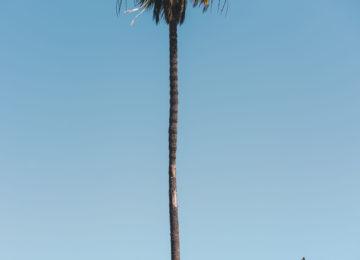 Palme in Los Angeles
