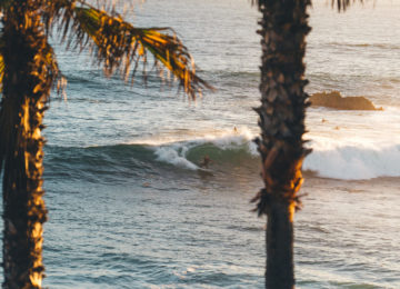 Palme mit Surfer im Hintergrund