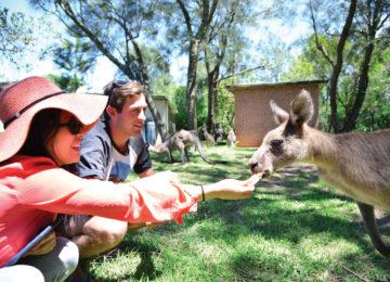 Guests feed Kangaroo in Wollongong