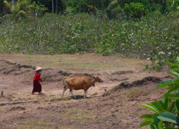 Locals in Bali