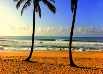 Sandtrand mit Palmen und Welle in Brasilien