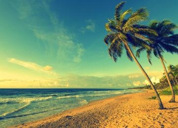 Palmenstrand mit Surfwellen