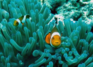 Nemo schaut in die Kamera