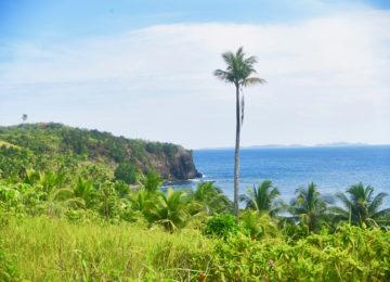Einsame Palme an der Küste von Siargao