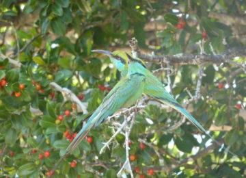 Birds in Sri Lanka National Park