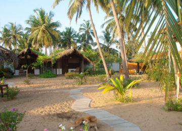 Bungalows under palm trees in Arugam Bay