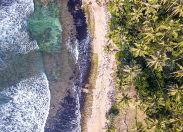 Bird's eye view of beach and palm trees in Sri Lanka