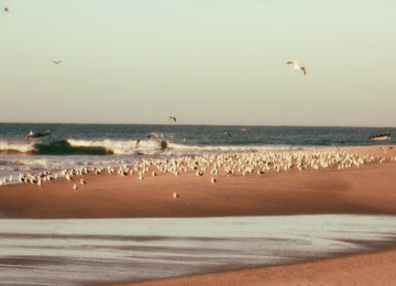 Seagulls on the beach by the sea