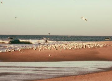 Möwen am Strand beim Meer