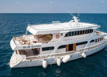 Blue Shark Surf Boat