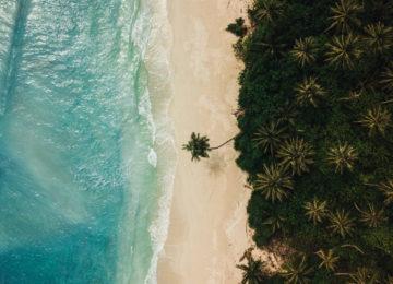 Vogelperspektive auf Beach mit Palmen