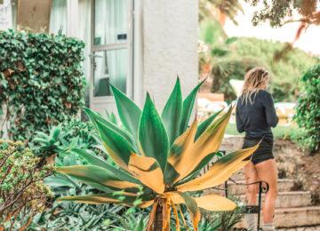 Pflanzenwelt Surfcamp Garten